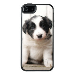 OtterBox Symmetry iPhone SE/5/5s Case with Collie Phone Cases design