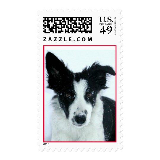 Border Collie Puppy Postage