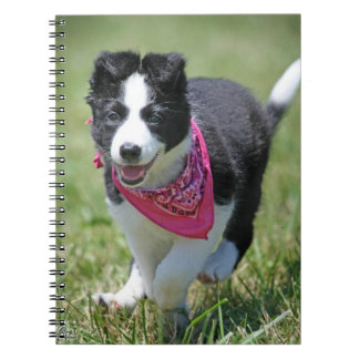 Border Collie Puppy running Notebook
