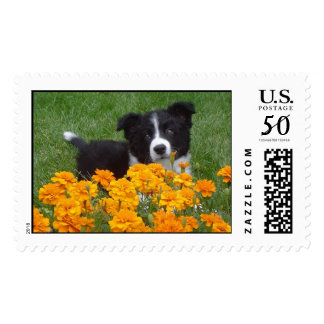 Border Collie Puppy Stamps