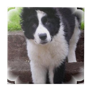 Border Collie Puppy Tile
