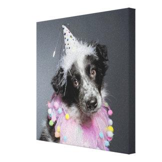 Border Collie Puppy Wearing Hat Canvas Print