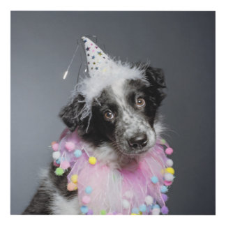 Border Collie Puppy Wearing Hat Panel Wall Art