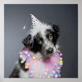Border Collie Puppy Wearing Hat Poster