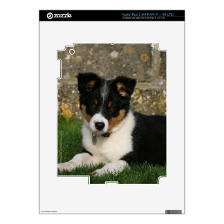 Border Collie Puppy with Leaf in Mouth iPad 3 Skins