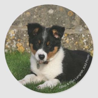 Border Collie Puppy with Leaf in Mouth Round Stickers