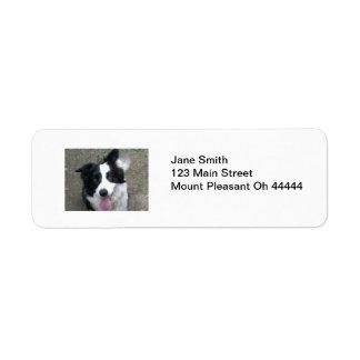 Border Collie Return Address Labels