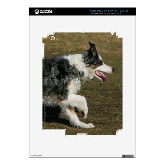 Border Collie Running 1 Decal For iPad 3