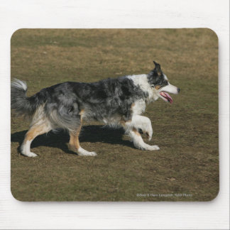 Border Collie Running 1 Mouse Pad