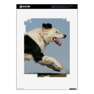 Border Collie Running 2 iPad 3 Skins