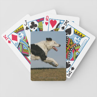 Border Collie Running 2 Bicycle Card Deck