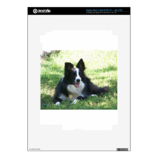 Border Collie Skin For iPad 3