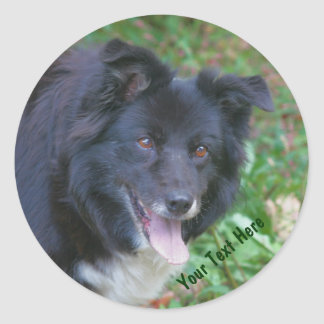 Border Collie Smiling Cute Dog Sticker