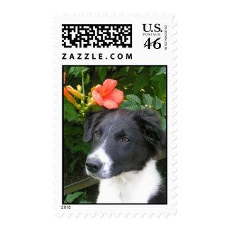 Border Collie Stamp