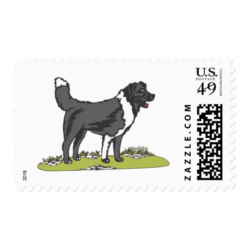 Border Collie Stamps