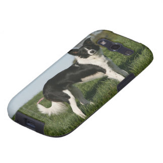 Border Collie Standing Samsung Galaxy S3 Cases