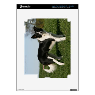 Border Collie Standing Decals For iPad 3