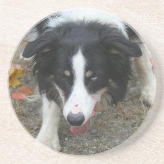 Border Collie Stare Dog Drink Coaster