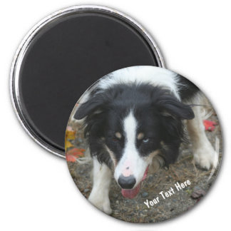Border Collie Stare Dog Magnet