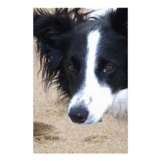 Border Collie Stare Stationery
