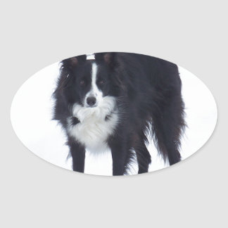 Border Collie Oval Stickers