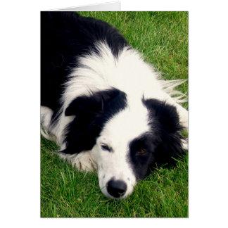 Border collie - tarjeta del perro