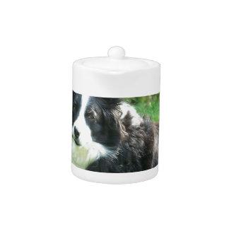Border Collie Teapot