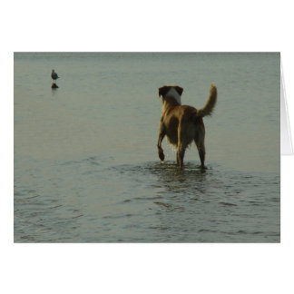 Border Collie - Tipper and Seagull Stationery Note Card