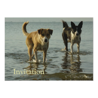 Border Collie - Tipper/Dixie in Water Card