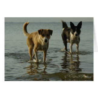 Border Collie - Tipper/Dixie in Water Greeting Cards