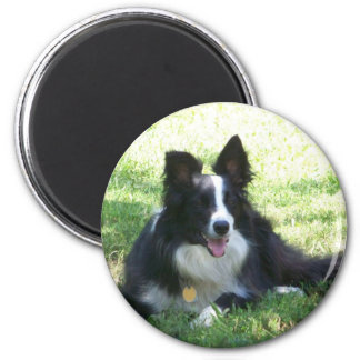 Border Collie Tshirts Magnet