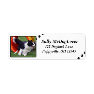 Border Collie Tunnel Agility Label