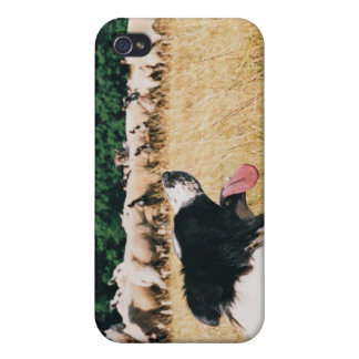 Border Collie Watching Sheep iPhone 4/4S Cover