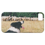 Border Collie Watching Sheep iPhone 5 Covers