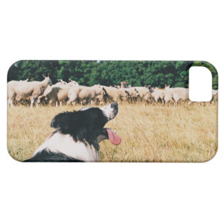 Border Collie Watching Sheep iPhone SE/5/5s Case