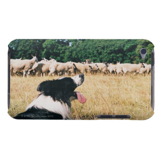 Border Collie Watching Sheep iPod Touch Cover