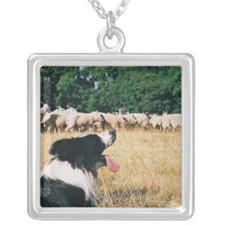 Border Collie Watching Sheep Silver Plated Necklace