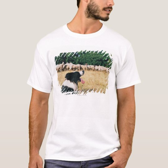 Border Collie Watching Sheep T-Shirt
