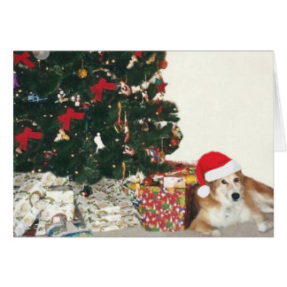 Border Collie Wearing a Santa Hat Card