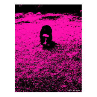 Border Collie With A Punch Of Hot Pink Postcard