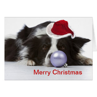 border collie with christmas hat card