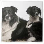 Border collie y perrito de la madre azulejo cuadrado grande