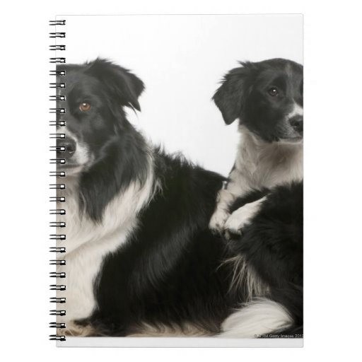 Border collie y perrito de la madre spiral notebook