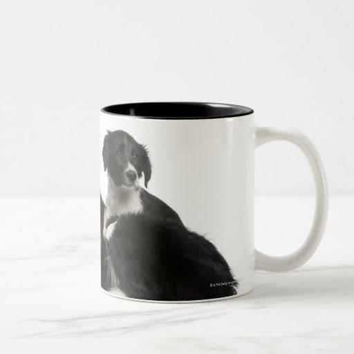 Border collie y perrito de la madre taza de dos tonos