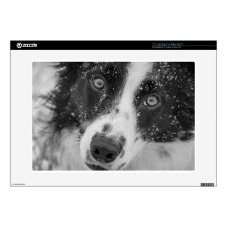 Border Collie's First Snow Decals For Laptops
