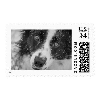 Border Collie's First Snow Postage