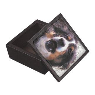 BORDER COLLIES PREMIUM TRINKET BOX
