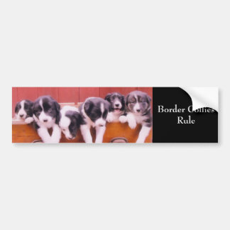 Border Collies Rule Cute Bumper Sticker