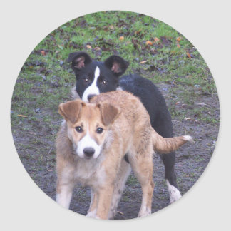 - Border Collies - Tipper/Dixie pup Stickers