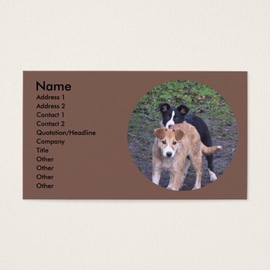 - Border Collies - Tipper/Dixie pups Business Card